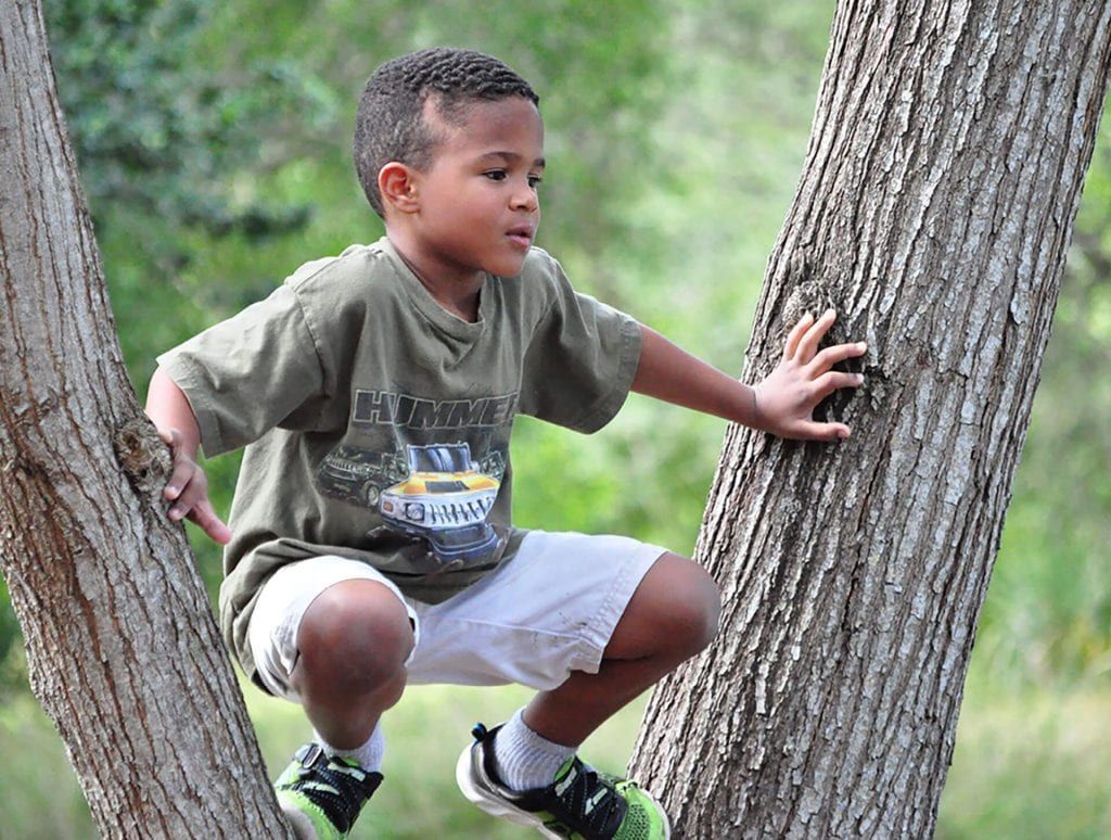 Young boy perched in tree with energy from child care food program.